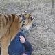 RU 0004 Kid plays with dangerous animal
