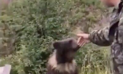 RU 0048 playing with wild bears