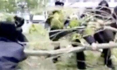 RUP 0011 Army members cut trees
