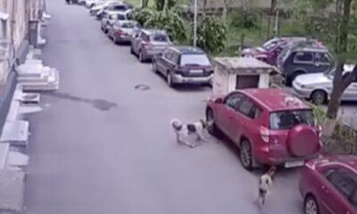 dog attack shot