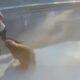 DOG 0003 Dog attacks to pedestrian