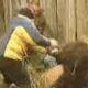 HY 0128 Avoiding bear attack