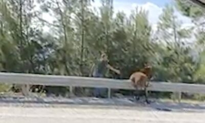 The abandoned donkey that couldn't jump over the highway barrier was left trapped, and passersby helped save it.