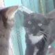 hostile cats want to attack each other when they meet at the window