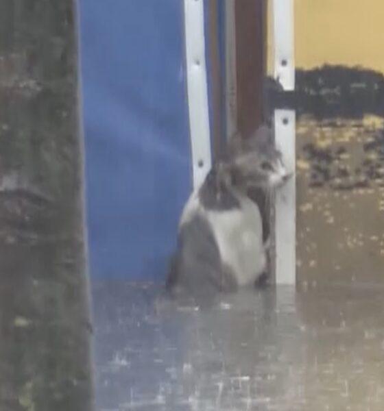 kedi gardaş