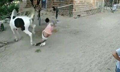 at hırsız