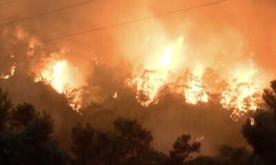 bodrum orman yangını