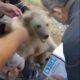 duzenbazlar ayı kurtarıyor