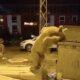 ayıoglu ayı gardaş