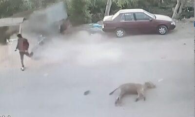 crash donkey
