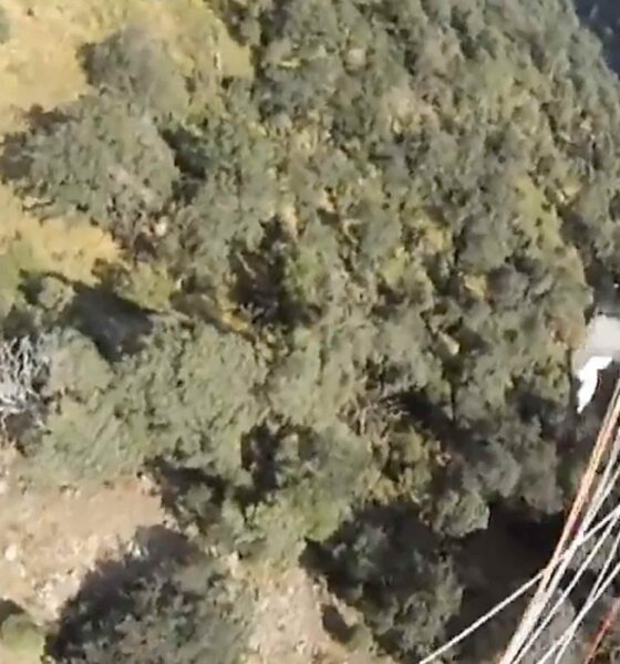 Birds of prey can be very dangerous for paraglider users