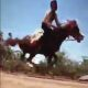 FAL 0077 Not easy to ride horse