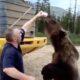 RU 0044 Feeding wild bear